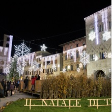 Todi Magic Christmas